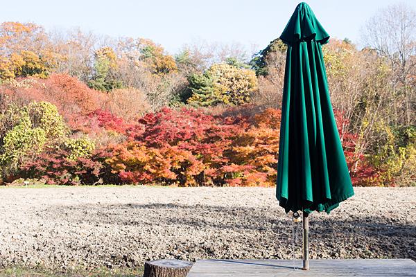 森林公園テーブルと紅葉モミジ