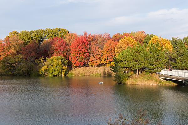 杁ヶ池の紅葉