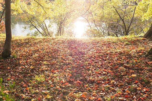 落ち葉と秋の日