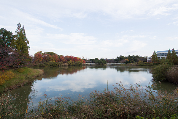杁ヶ池全景