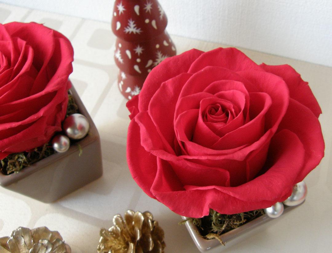 Roseメリア