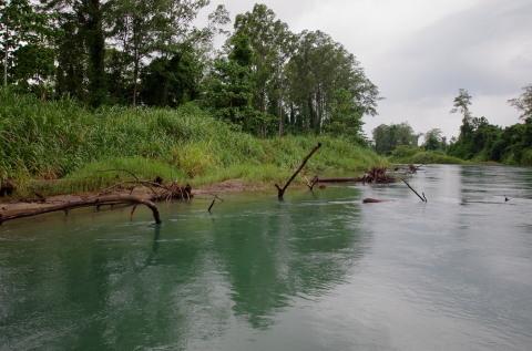 スポッテッドバスの棲む川