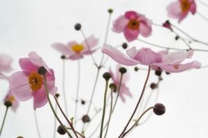 flower-215565__340.jpg