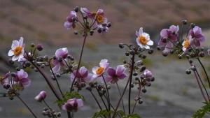 flowers-3663071__340.jpg