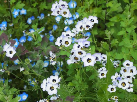 my-garden 076 (2)