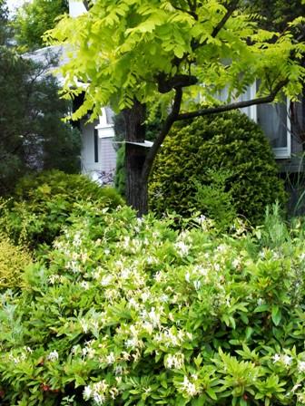 my-garden 057 (2)