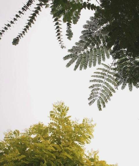 my-garden 060 (2)