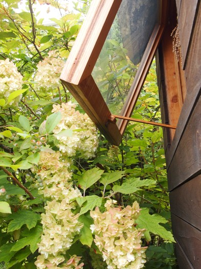 my-garden 069 (3)