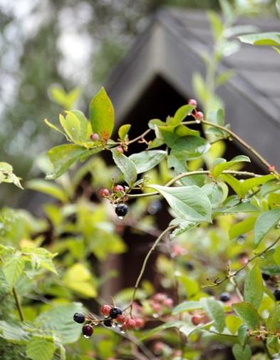my-garden 052 (2)