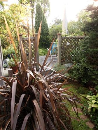 my-garden 049 (2)