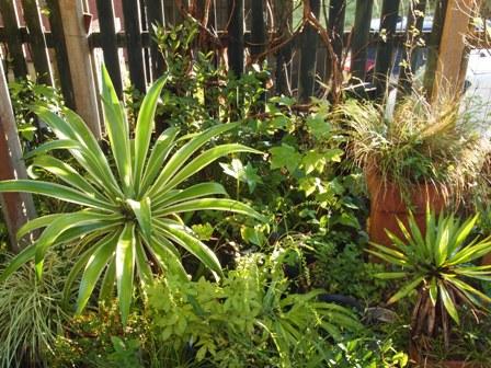 my-garden 012