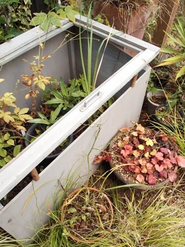 my-garden 076