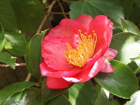 my-garden 057