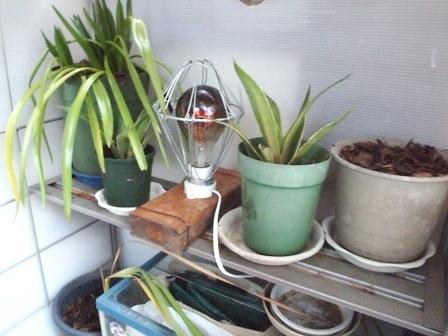 my-garden 181