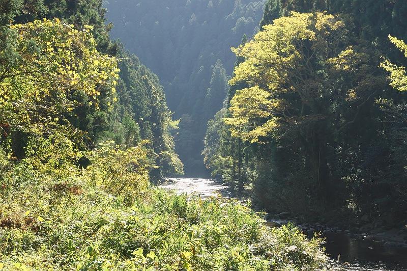 巴川沿いの風景