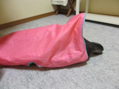 ピンクの袋に入るレム