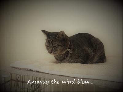 風は吹くんだ