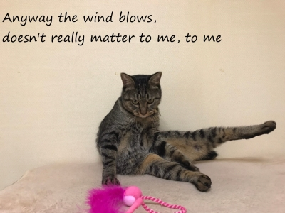 どうせ風は吹く