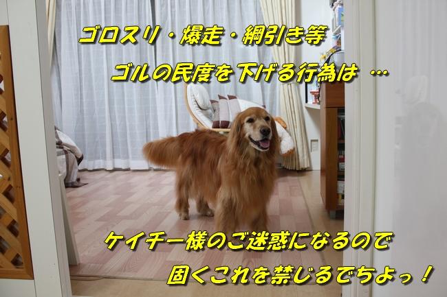 20161026110356791.jpg