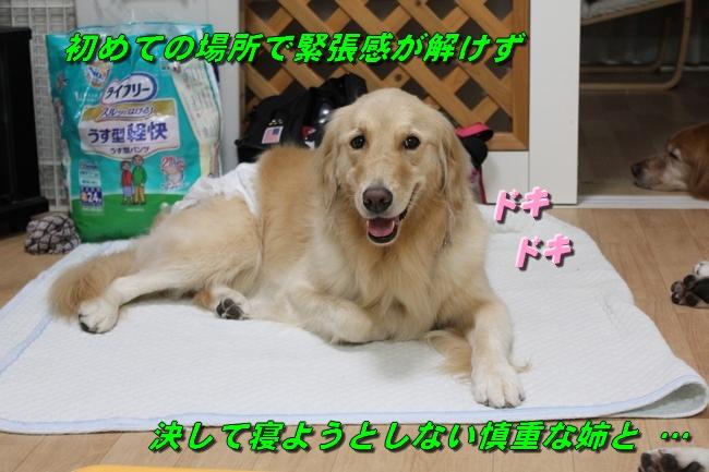 20161027112319c0a.jpg