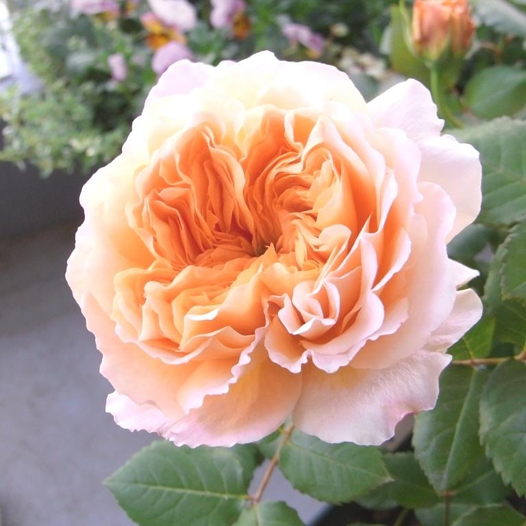 5月1日(日)代々木八幡宮 「奥渋谷杜の手づくり市」