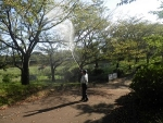 サクラ樹木に、ニームサイドEX散布