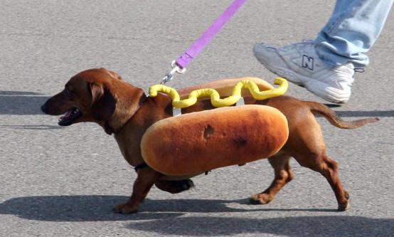 「ホットドッグ」の「ドッグ」とは、ダックスフントのことだった?
