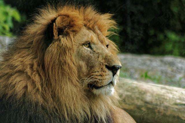 イギリスの春は、ライオンのようにやって来る?