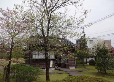 花水木の咲く志功宅