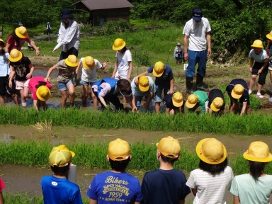苗代の稲の苗取りから始まります。