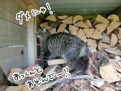 04122016_cat1.jpg