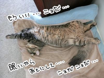 04122016_cat3.jpg