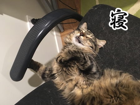 05112016_cat4.jpg