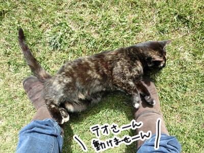 05122016_cat5.jpg