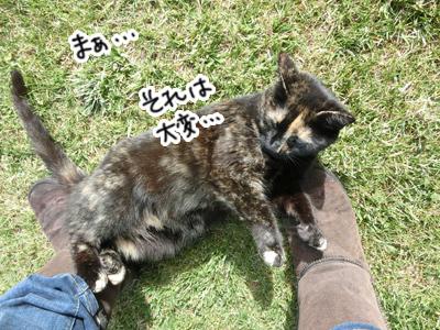 05122016_cat6.jpg