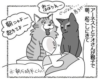 06122016_cat1.jpg