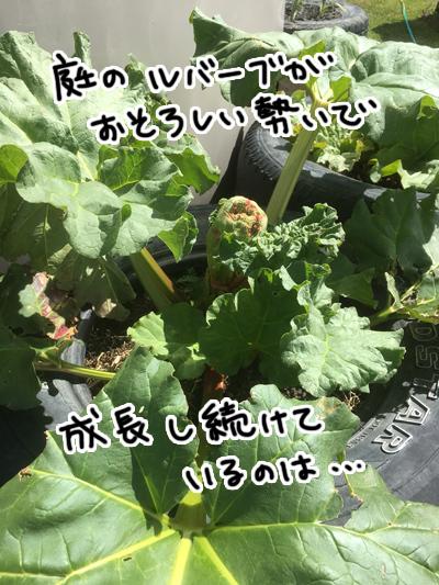 07112016_cat5.jpg