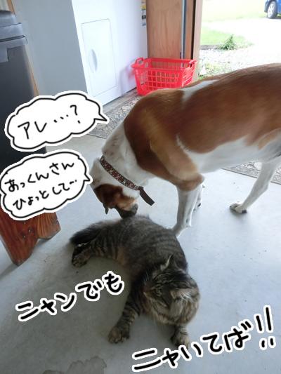 07122016_cat8.jpg
