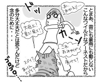 14112016_cat3.jpg