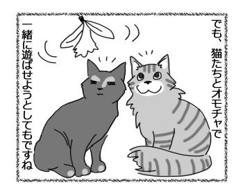 14122016_cat3.jpg