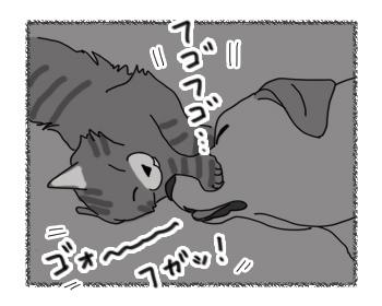 16122016_cat3.jpg