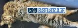 16122016_catBanner.jpg