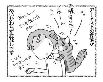 17112016_cat1.jpg