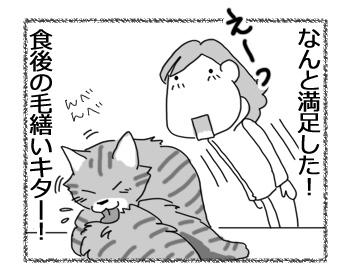 17112016_cat4.jpg