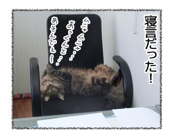18112016_cat5.jpg