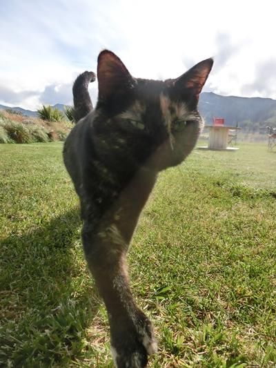 18122016_cat3.jpg