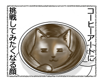 18122016_cat4.jpg