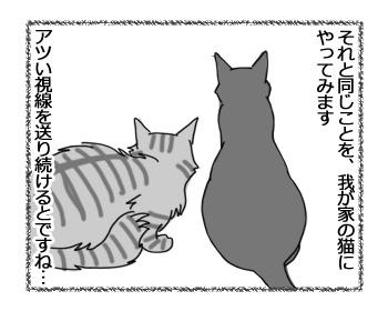 19122016_cat3.jpg