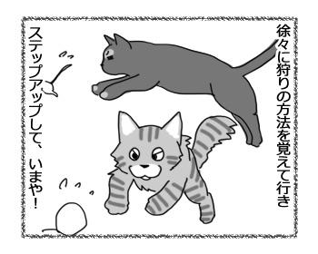 21122016_cat2.jpg
