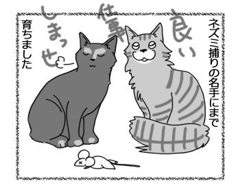 21122016_cat3.jpg